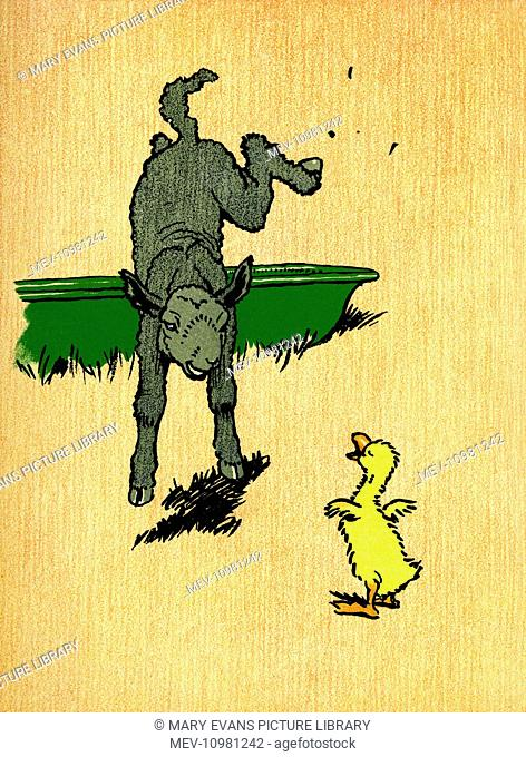 Illustration by Cecil Aldin, Farm Babies. Decimus Duckling meets a lamb in a field and suggests they play a game. He tries to kick up his heels in imitation of...