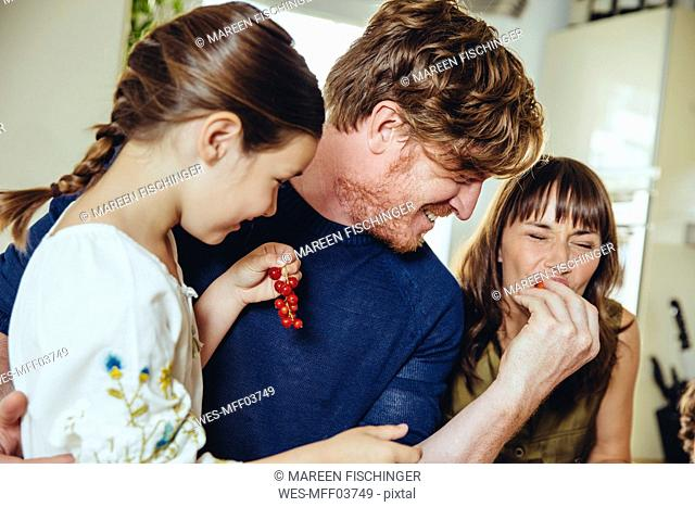 Parents and daughter tasting redcurrants