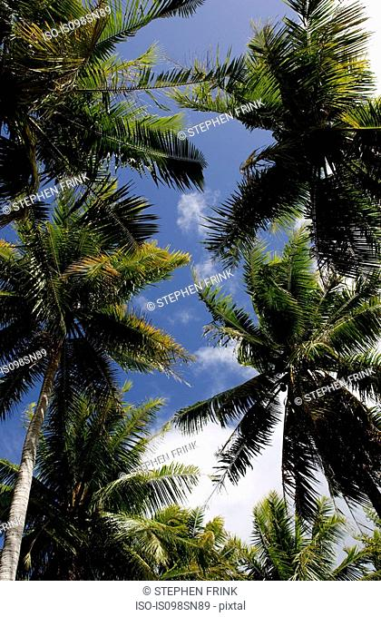 Tropical scene with palm trees