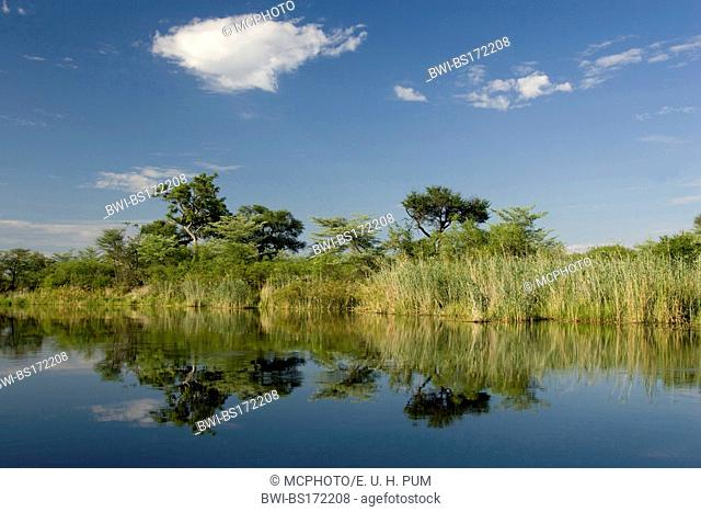 trees mirroring in the Kwando River, Namibia, Caprivi