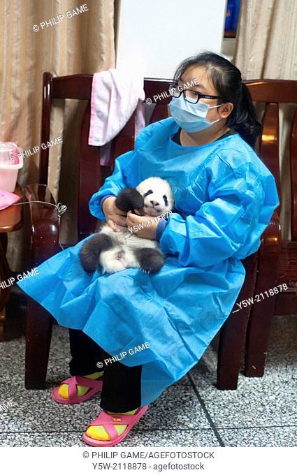 Incubation nursery at the Giant Panda Breeding Research Base at Chengdu, Sichuan, China