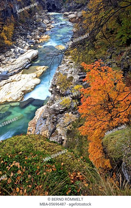 Europe, Sweden, Lapland, province of Norrbotten, Abisko national park, Autumn at the Abisko canyon