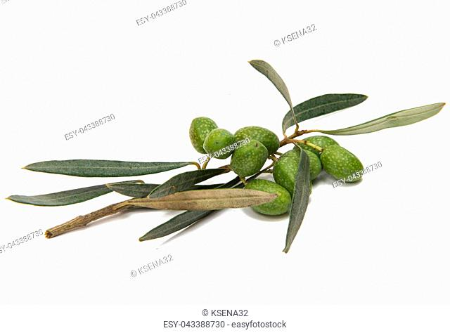 Green olives with leaves on a white background