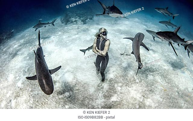 Underwater view of female free diver standing on seabed surrounded by reef sharks, Bahamas