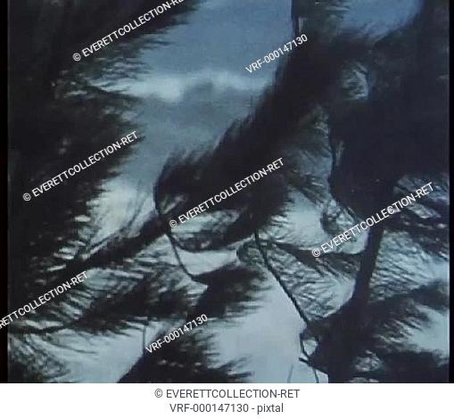 Coastal trees blowing under strong wind