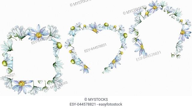 White daisy. Floral botanical flower. Frame border ornament square. Aquarelle wildflower for background, texture, wrapper pattern, frame or border