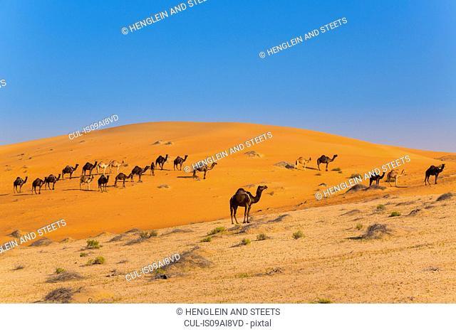 Rub al-Khali desert, empty quarter, Liwa desert, United Arab Emirates