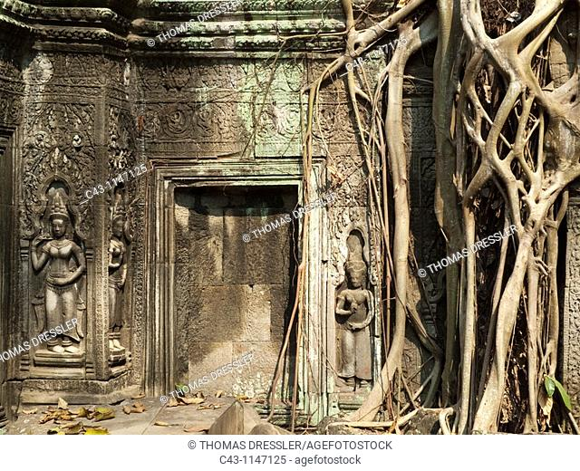 Cambodia - The roots of a fig tree invade a gallery at the Ta Prohm temple in Angkor, supporting the monument and destroying it at the same time  On the left...