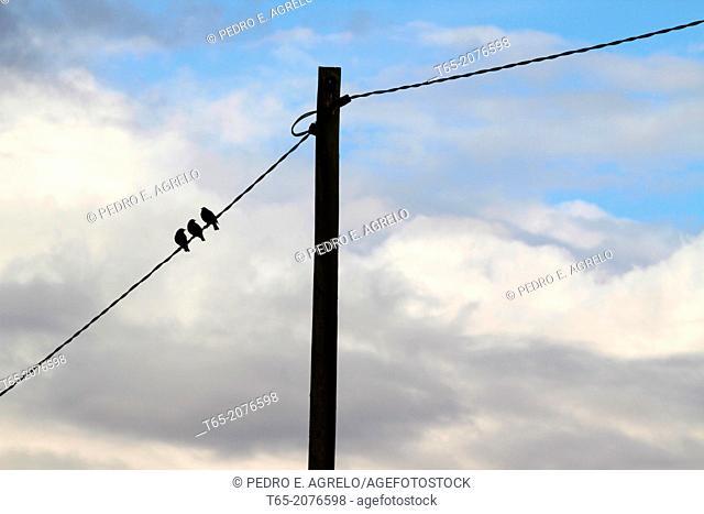 Birds on a lamppost in Palas de Rey Galicia