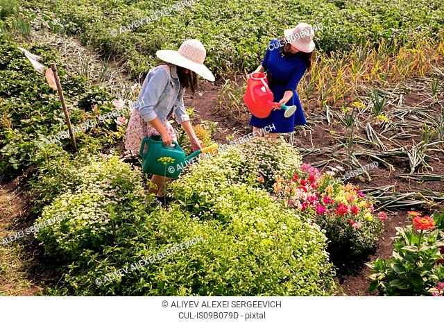 Two females wearing sun hats, using watering can to water plants