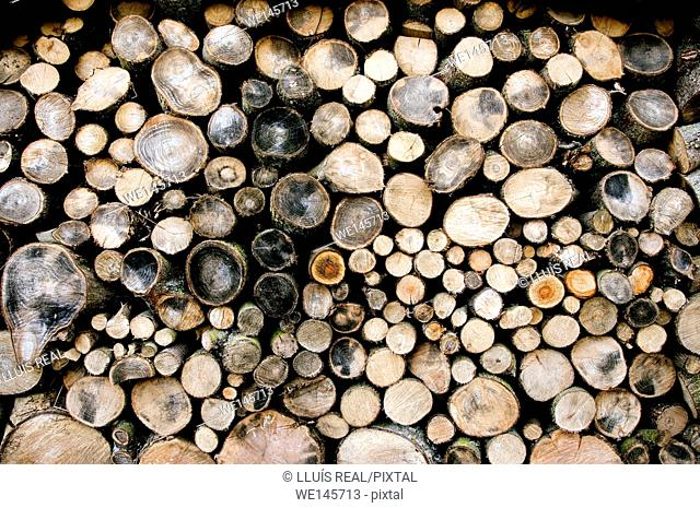 Large pile of wooden logs