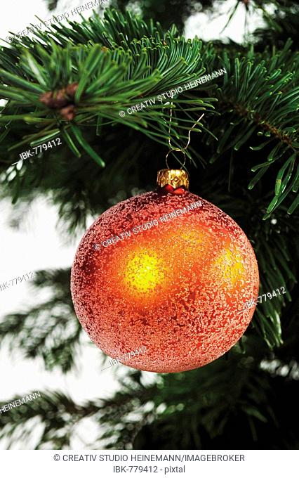 Red gold Christmas ball ornament hanging from the branch of a Christmas tree