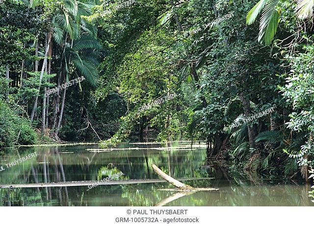 Proserpine Rainforest, Queensland, Australia