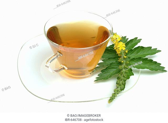 Common Agrimony, Church Steeples or Sticklewort (Agrimonia eupatoria), herbal tea, medicinal tea