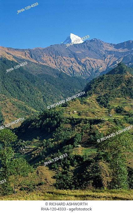 Tip of Annapurna South above terraced hills, looking east from Sikha Village, between Tatopani and Ghorepani on the Jomsom Trek north of Pokhara, Nepal, Asia