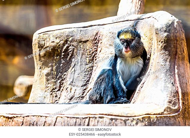 Monkey sitting on stone in zoo