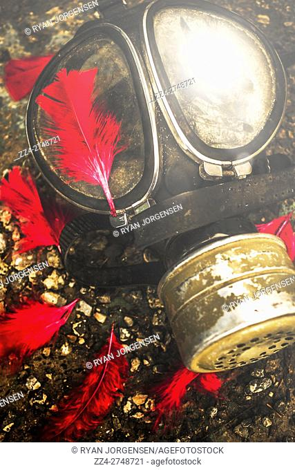 Close up on an old chemical gas mask with shrowdes of fallen red feathers. Soldiers of the fallen