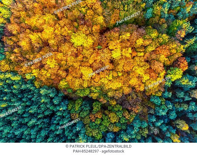 An aerial picture with a drone shows the fall foliage amongst pine trees near Sieversdorf, Germany, 30 October 2016. Photo:Patrick Pleul | usage worldwide