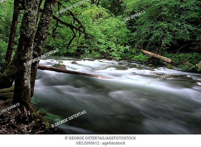Oak Fork Clackamas River, Mt Hood National Forest, Oregon
