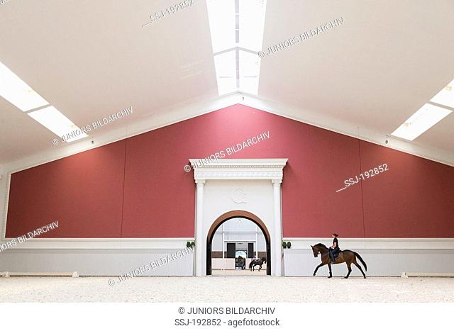 Warmblood. Anke Simon galloping on a juvenile bay mare in a luxurious riding hall. Germany
