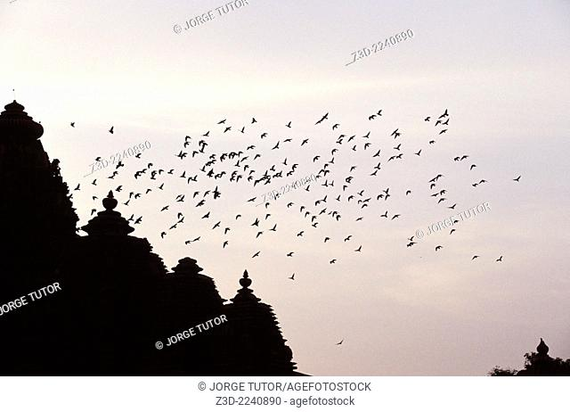 Dozens of starlings flying over a Khajuraho Temple at dusk