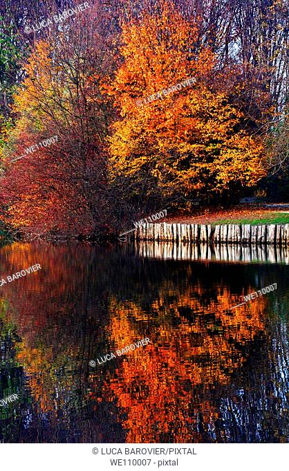 The wonderful colours of autumn mirrored on a lake, Milano Italy
