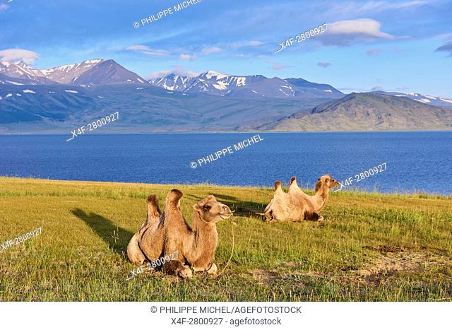 Mongolia, Bayan-Ulgii province, western Mongolia, National parc of Tavan Bogd, the 5 highest summit of the Altay mountains, Dayan Nuur lake
