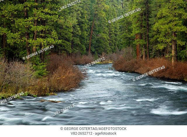 Metolius Wild and Scenic River, Deschutes National Forest, Oregon