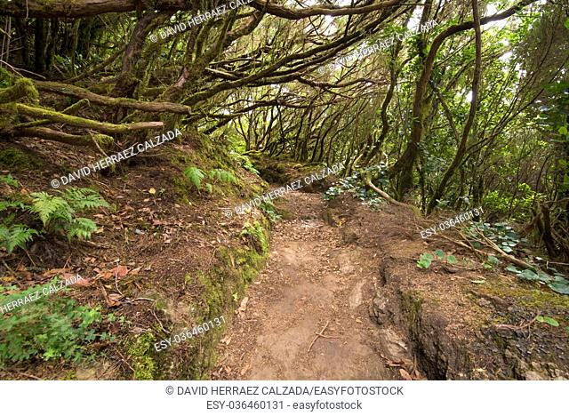 Anaga tropical forest in tenerife, Canary islands, Spain