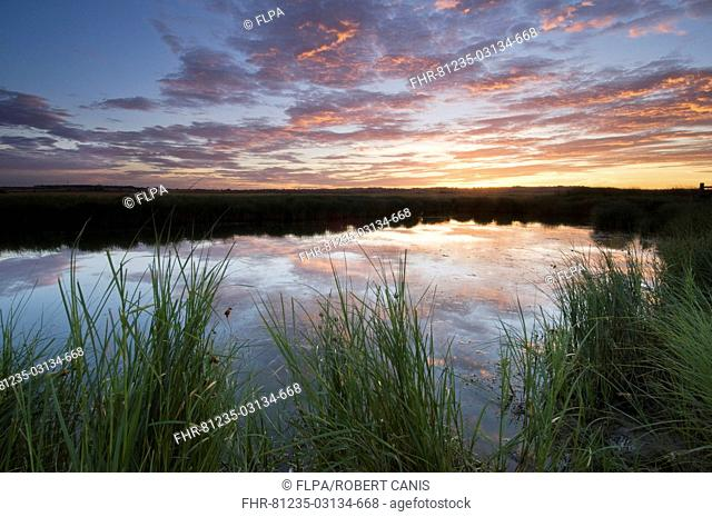 View of flooded grazing marsh at sunrise, Elmley Marshes N N R , North Kent Marshes, Isle of Sheppey, Kent, England, july