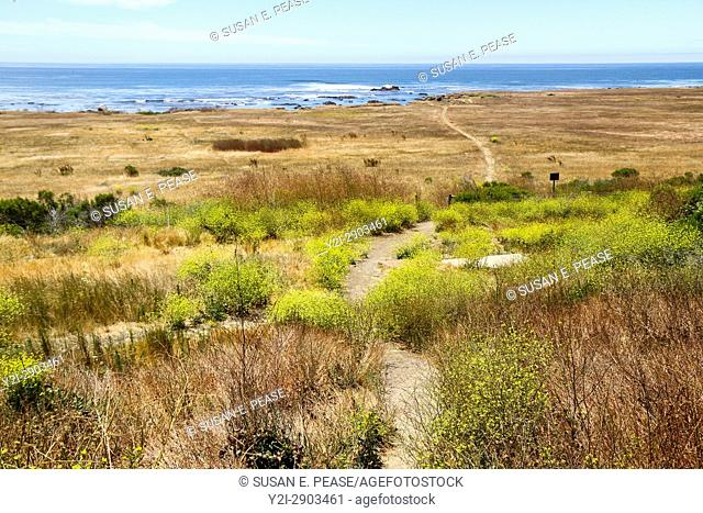 A narrow footpath towards the ocean, San Luis Obispo County, California, United States, North America