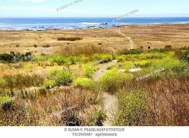 A narrow footpath towards the ocean, San Luis Obispo County, California, United States, North America
