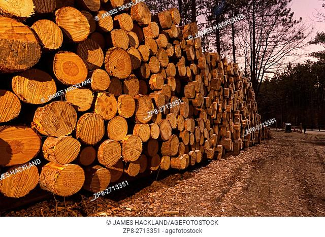 A large pile of felled logs in a forest at night. Bendor and Graves Tract, York Regional Forest, East Gwillimbury, Ontario, Canada