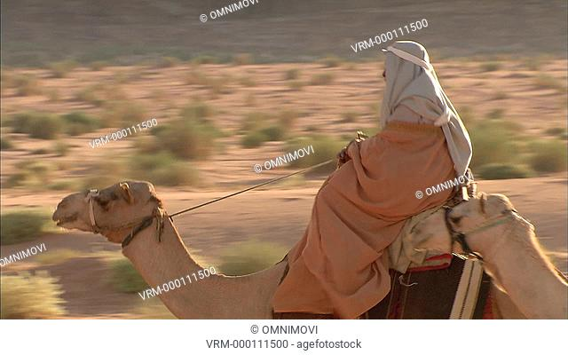 Close up of Arab men wearing Keffiyeh riding Camels in desert with bushes behind