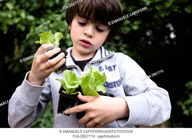 child preparing vegetable garden