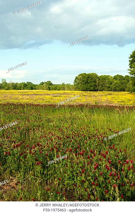 Agricultural Field in Mississippi