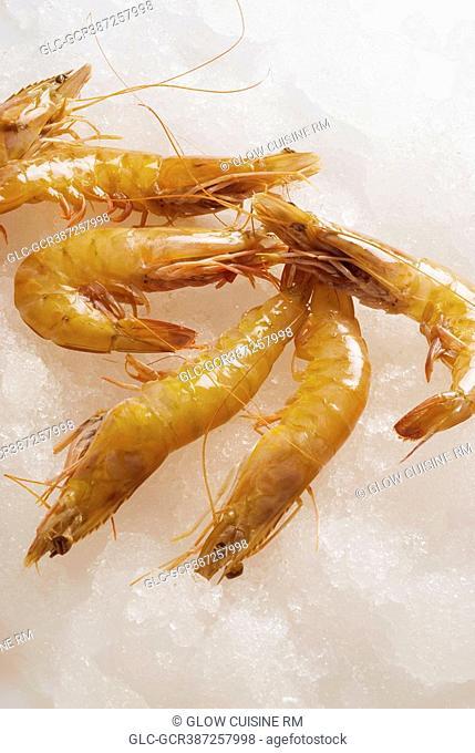 Close-up of shrimp on ice