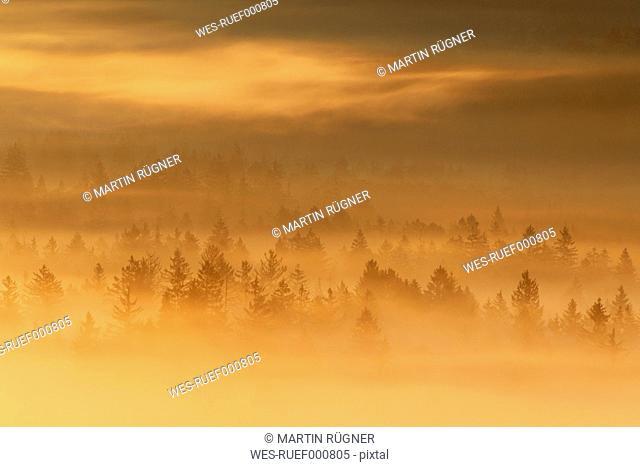 Germany, Bavaria, Upper Bavaria, Munich, View of misty forest at dawn