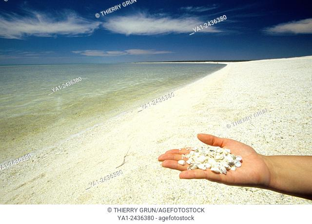 Australia, Western Australia, Shark bay, Haridon Bight, Shell Beach, beach composed only of small shells Fragum erugatum