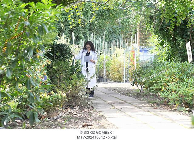 Female scientist inspecting plants at greenhouse, Freiburg im Breisgau, Baden-Württemberg, Germany