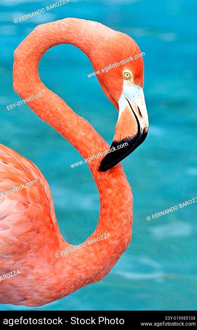 Fresh image of a pink flamingo