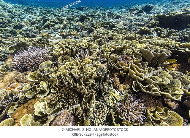 A profusion of hard and soft corals on Siaba Kecil Island, Komodo National Park, Flores Sea, Indonesia