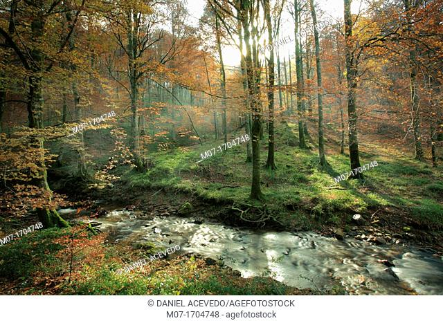 Arga river and beech tree forest, Navarra, Spain
