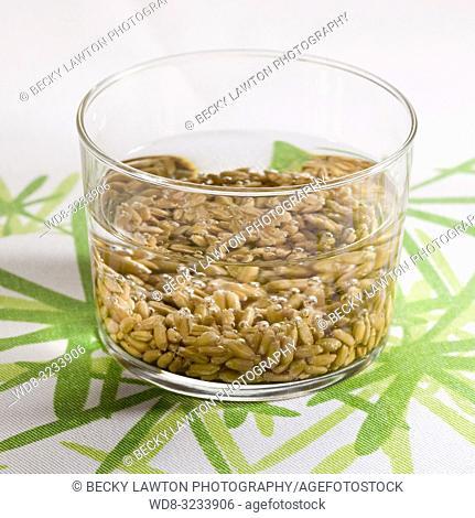 como germinar el trigo. parte de una serie: paso 1 de 8 / How to sprout wheat berries (Part of a series, step 1 of 8)