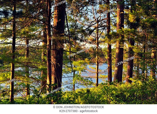 Seney wetlands in early summer, Seney NWR, Michigan, USA