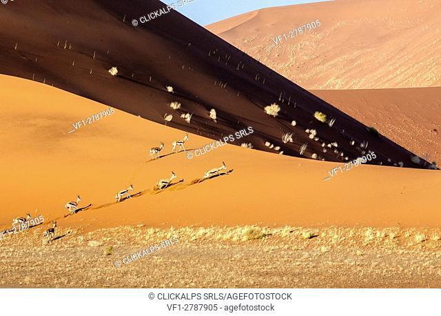 Gazelles run between the sand dunes Deadvlei Sossusvlei Namib Desert Naukluft National Park in Namibia Africa