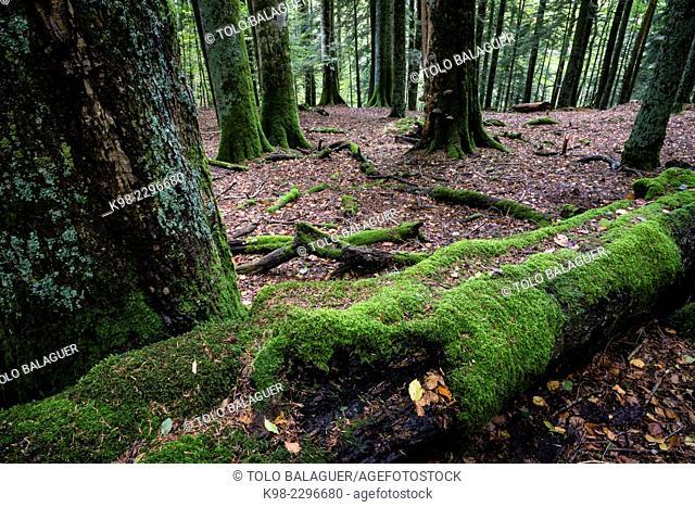 Reserva integral de Lizardoia, Selva de Irati, Navarre, Spain