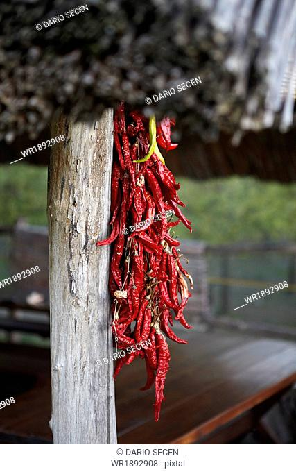 Red chili pepper drying outdoors, Baranja, Croatia