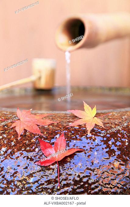Water bowl and red maple leaves, Shizuoka Prefecture