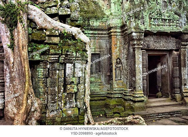 Ta Phrom, Temples Angkor, Cambodia